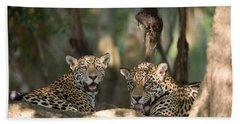 Jaguars Panthera Onca Resting Beach Towel