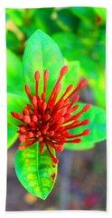Jamaican Ixora Flower2 Beach Towel