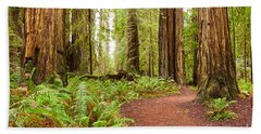 Jedediah Trail - Massive Giant Redwoods Sequoia Sempervirens In Redwoods National Park. Beach Towel