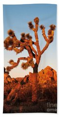 Beach Towel featuring the photograph Joshua Tree At Sunset by Mae Wertz
