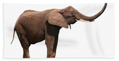 Joyful Elephant Isolated On White Beach Towel