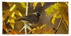 Junco In Morning Light Beach Sheet by Nava Thompson