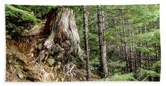 Just Hanging On Old Growth Forest Stump Beach Sheet by Roxy Hurtubise