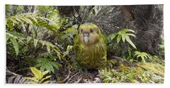 Beach Towel featuring the photograph Kakapo Male In Forest Codfish Island by Tui De Roy