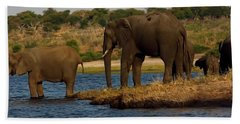 Beach Sheet featuring the photograph Kalahari Elephants Preparing To Cross Chobe River by Amanda Stadther