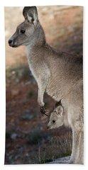 Kangaroo And Joey Beach Towel