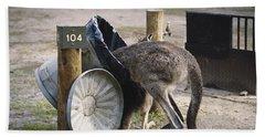 Kangaroo In Garbage Beach Towel
