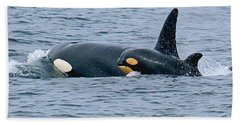 Beach Sheet featuring the photograph Killer Whale Mother And New Born Calf Orcas In Monterey Bay 2013 by California Views Mr Pat Hathaway Archives