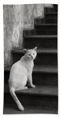 Beach Towel featuring the photograph Kimba by Laura Melis