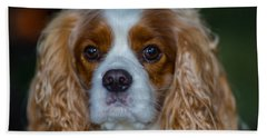 King Charles Beach Towel