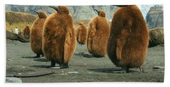 King Penguin Chicks Beach Sheet