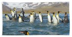 King Penguins Swimming St Andrews Bay Beach Sheet by Yva Momatiuk John Eastcott