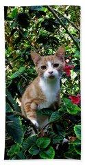 Kitten Beach Towel by Pamela Walton