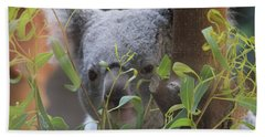 Koala Bear  Beach Towel by Dan Sproul