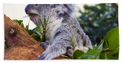 Koala Eating In A Tree Beach Towel by Chris Flees