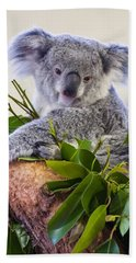 Koala On Top Of A Tree Beach Towel by Chris Flees
