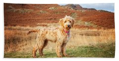 Labradoodle Puppy Beach Towel by Mike Taylor
