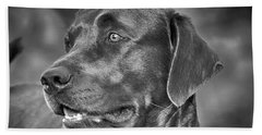 Labrador Sweetie Beach Towel