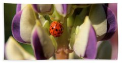 Lady Bug On Lupine Beach Towel