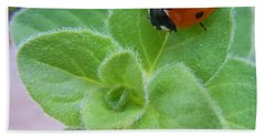 Beach Sheet featuring the photograph Ladybug And Oregano by Robert ONeil