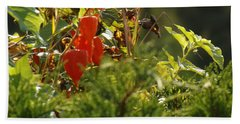 Beach Towel featuring the photograph Lantern Plant by Brenda Brown