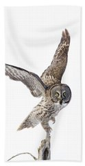 Lapland Owl On White Beach Towel by Mircea Costina Photography