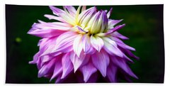 Lavendar Dahlia Beach Towel by Donna Walsh