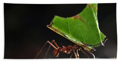 Leafcutter Ant Beach Towel by Francesco Tomasinelli