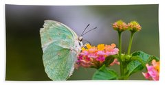 Lemon Emigrant Butterfly Beach Sheet