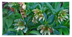 Lenten Roses Beach Towel