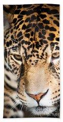 Leopard Resting Beach Sheet