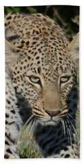 Leopard Stalking Beach Sheet