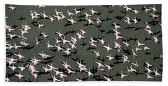 Lesser Flamingo Flock Flying Lake Kenya Beach Towel