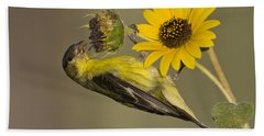 Lesser Goldfinch On Sunflower Beach Towel by Bryan Keil