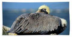 Let Sleeping Pelicans Lie Beach Sheet by Susan Molnar