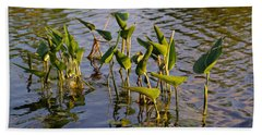 Lillies In Evening Glory Beach Sheet