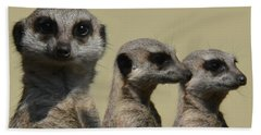 Line Dancing Meerkats Beach Sheet