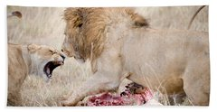 Lion And A Lioness Panthera Leo Beach Towel