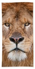 Beach Towel featuring the photograph Lion Close Up by Jerry Fornarotto