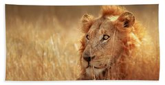 Lion In Grass Beach Towel