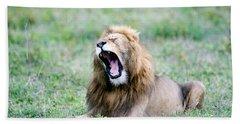 Lion Panthera Leo Yawning In A Field Beach Towel