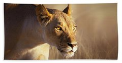 Lioness Portrait-1 Beach Towel