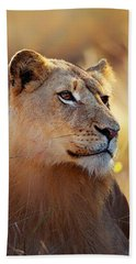 Lioness Portrait Lying In Grass Beach Towel