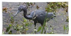 Little Blue Heron - Waiting For Prey Beach Sheet by Christiane Schulze Art And Photography