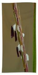 Beach Towel featuring the photograph Little Bluestem Grass Flowers by Daniel Reed