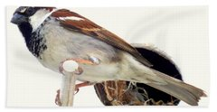 Little Sparrow Beach Towel by Karen Wiles