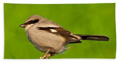 Loggerhead Shrike Beach Sheet