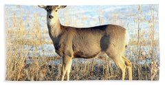 Beach Sheet featuring the photograph Lonesome Doe Sunset by Barbara Chichester