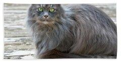 Long Haired Gray Cat Art Prints Beach Sheet