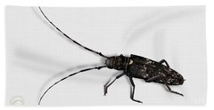 Long-hornded Wood Boring Beetle Monochamus Sartor - Coleoptere Monochame Tailleur - Beach Towel